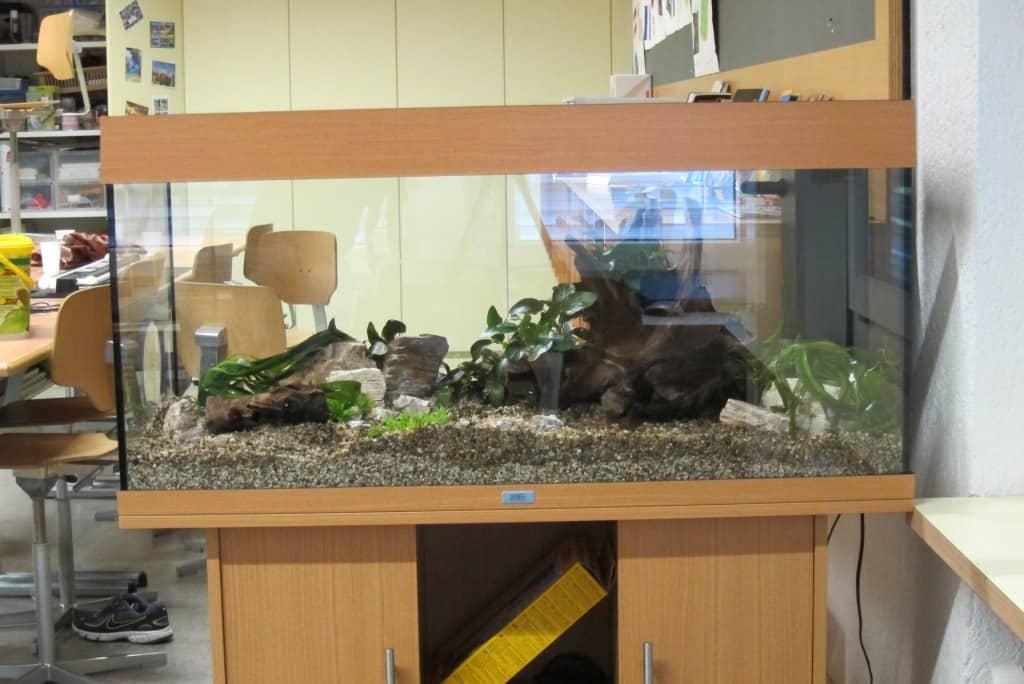 Projekt Schulaquarium, Teil 1 6
