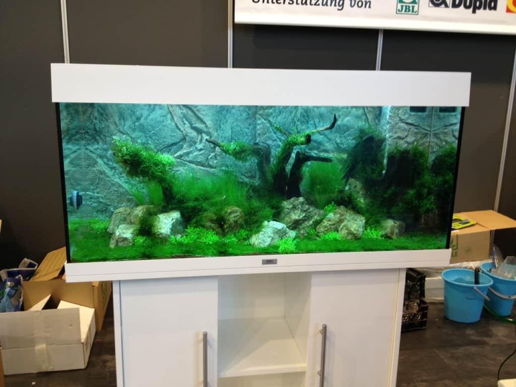 Zookauf aquarien einrichtungsmeisterschaft 2012: strahlende ...