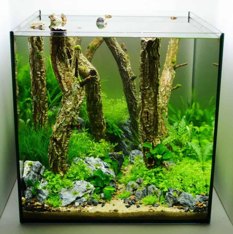 Aquascaping-Seite ausgebaut 1