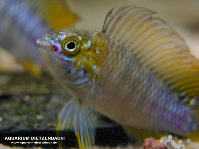 Der faszinierende Körperbau der Fische - my-fish