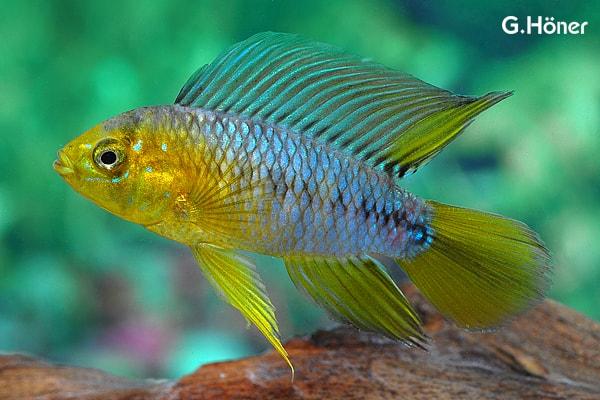 Verbreitungskarte und Fischentwicklung in der Erdgeschichte 16
