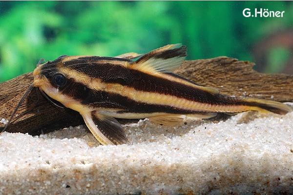 Verbreitungskarte und Fischentwicklung in der Erdgeschichte 15