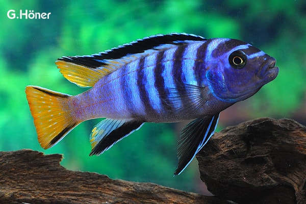 Verbreitungskarte und Fischentwicklung in der Erdgeschichte 37