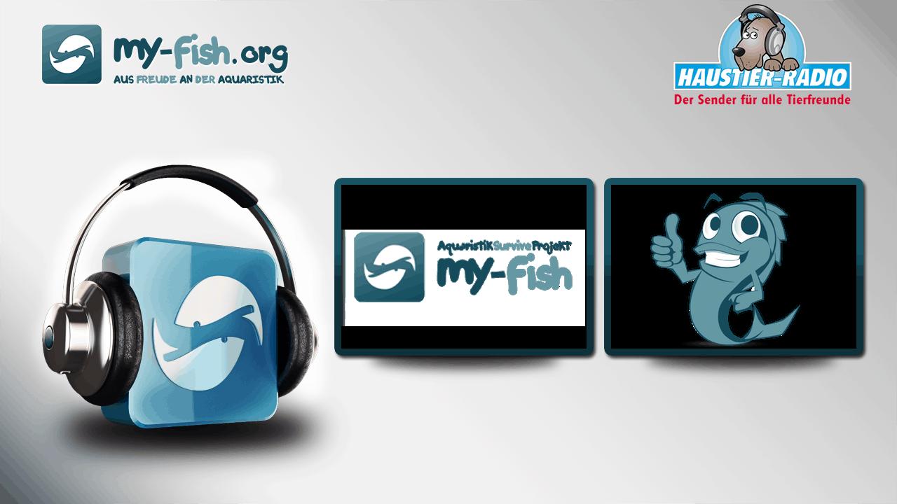 Podcast Episode #52: my-fish.org - Aus Freude an der Aquaristik (Matthias Wiesensee) 1
