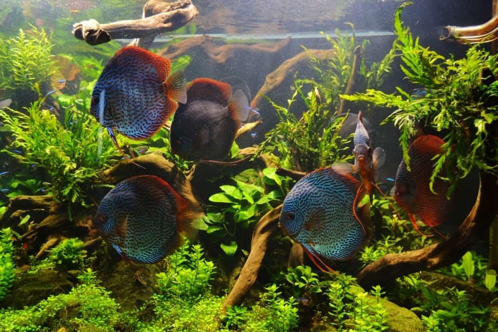 Einrichtung My Fish