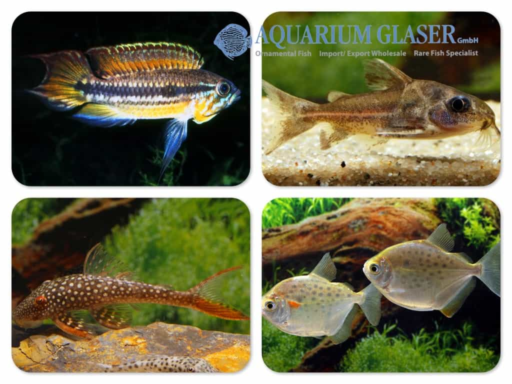 Quelle: Aquarium Glaser