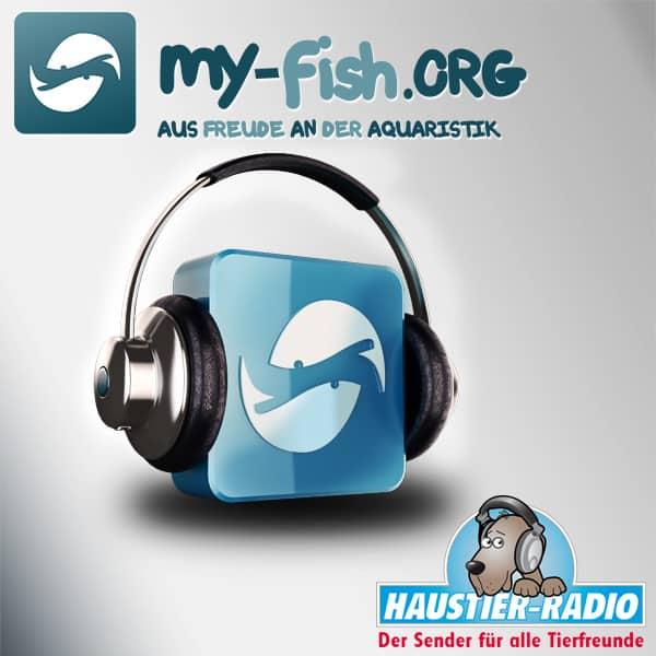 my-fish Radio 600x600