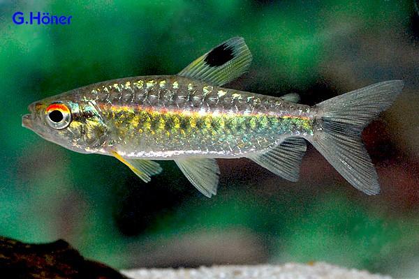 Der faszinierende Körperbau der Fische 2