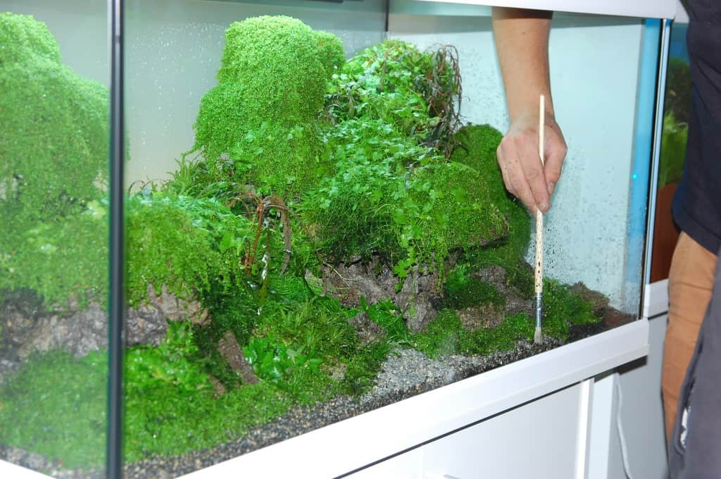 aquascaping tipps my fish. Black Bedroom Furniture Sets. Home Design Ideas