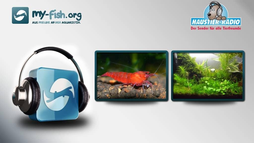 my-fish.org - Aus Freude an der Aquaristik