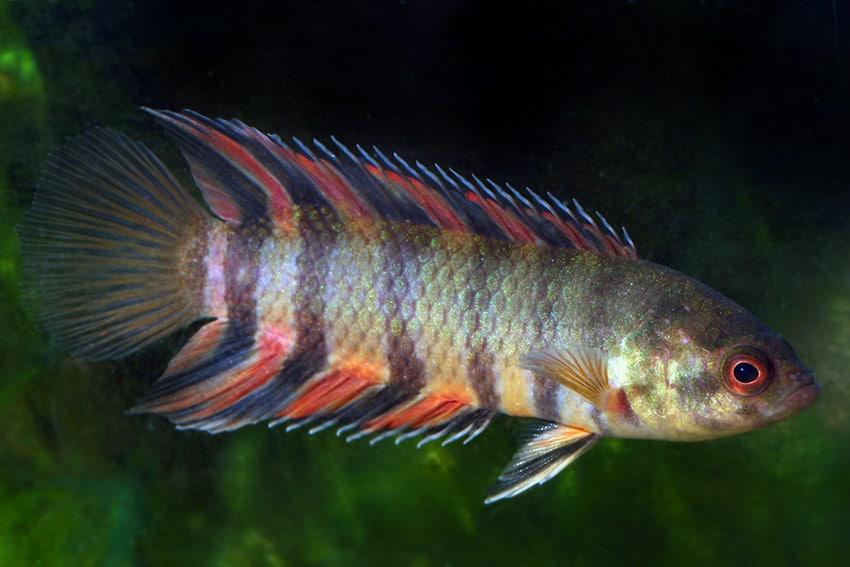 Verbreitungskarte und Fischentwicklung in der Erdgeschichte 34