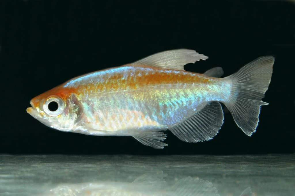 Verbreitungskarte und Fischentwicklung in der Erdgeschichte 27