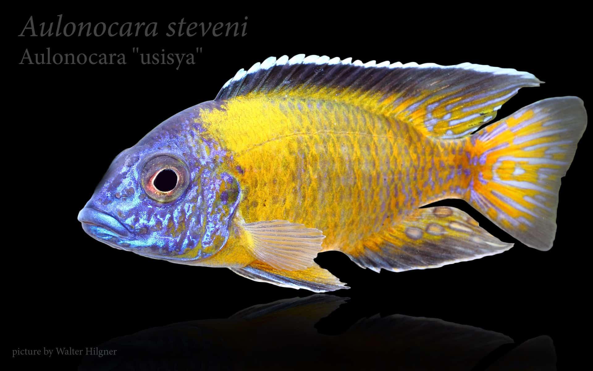 Beste Einfache Färbung Seite Fisch Zeitgenössisch - Entry Level ...