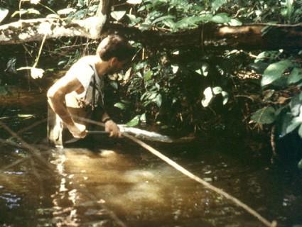 Cichliden-Experte Anton Lamboj bei der Feldforschung am Lobe River in Kamerun. Foto: Anton Lamboj