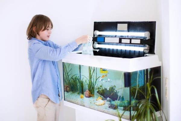 ZZF Junge bereitet Aquarium vor Wenn das Aquarium fertig eingerichtet und bepflanzt ist, können die Fische eingesetzt werden. Veröffentlichung nur mit dazugehörendem Dokument honorarfrei. Copyright: WZF/Shutterstock