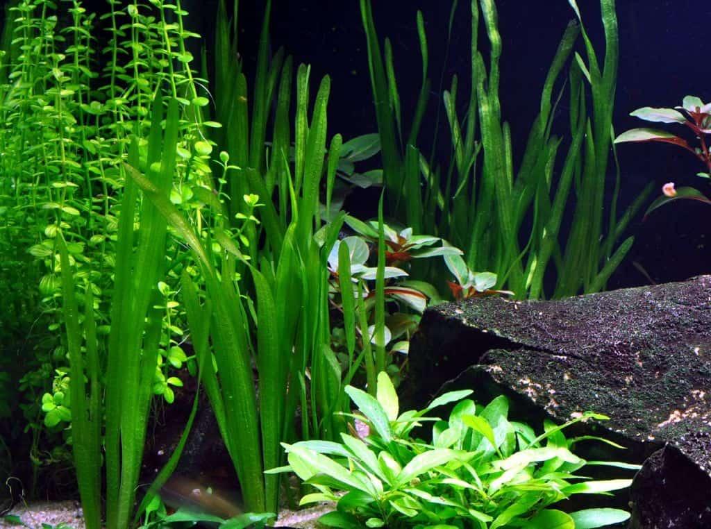 Pflanzen für den Hintergrund 12