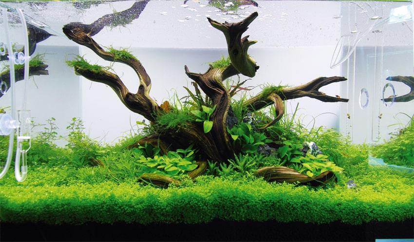 Aquascape9