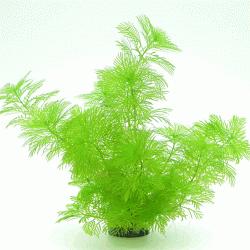Myriophyllum mattogrossense 3