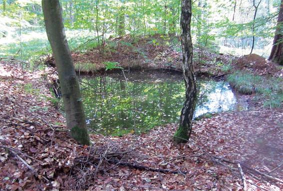 Gefahrenquelle Laub: So schützen Sie Ihren Teich