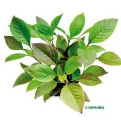 Passende Pflanzen 7