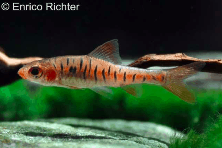 Verbreitungskarte und Fischentwicklung in der Erdgeschichte 39
