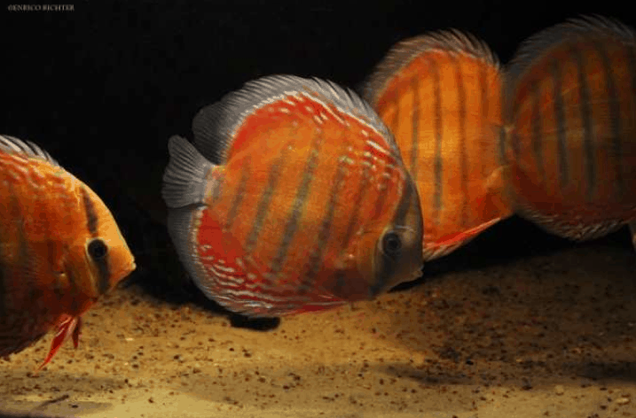 Bild: Aqua-Global