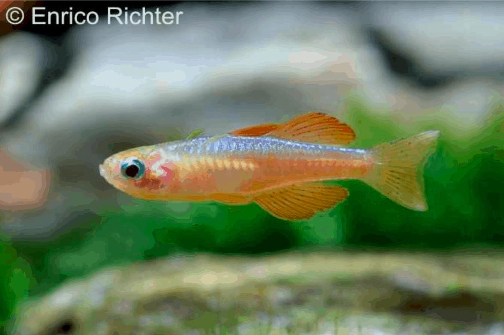 Verbreitungskarte und Fischentwicklung in der Erdgeschichte 58