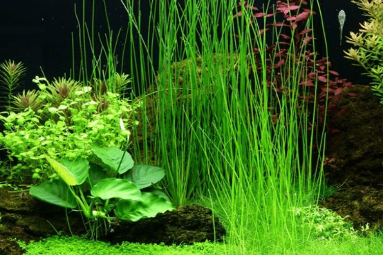 Bild: Tropica Aquarium Plants