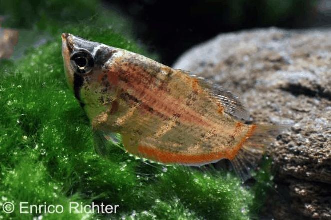 Verbreitungskarte und Fischentwicklung in der Erdgeschichte 42