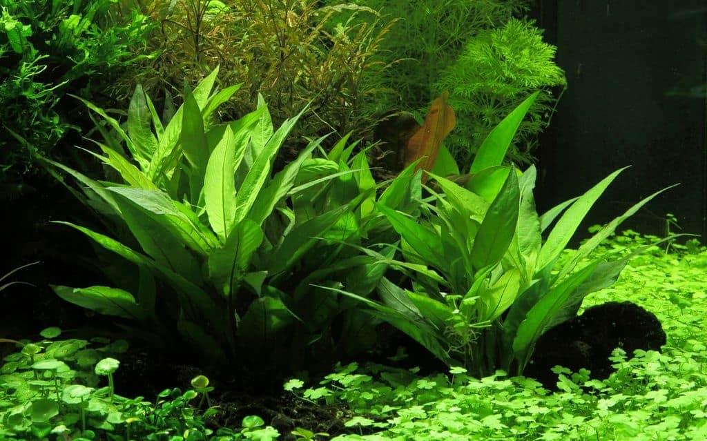 Pflanzen für den Hintergrund 6