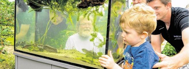 Teichfest des Aquarienvereins Lotos Witten mit Ausstellung einheimischer Krebsarten.  Foto: Thomas Nitsche