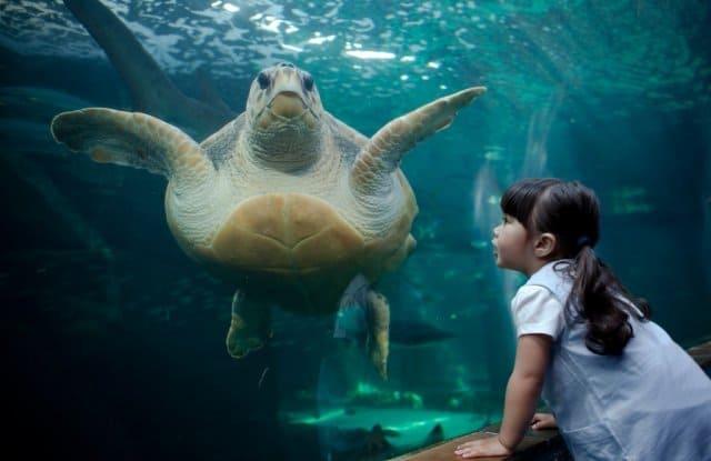 Foto: Two Oceans Aquarium