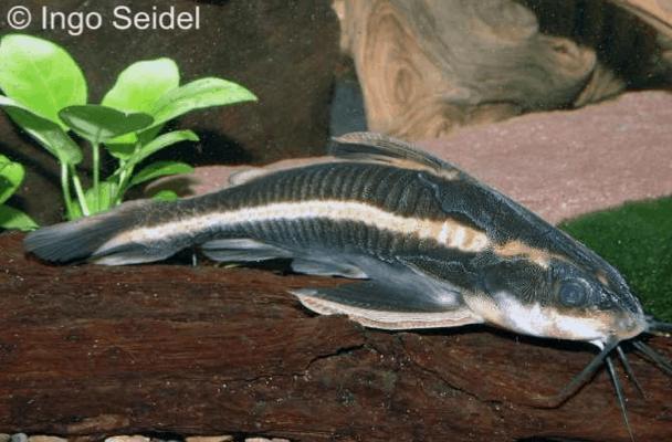 Verbreitungskarte und Fischentwicklung in der Erdgeschichte 14