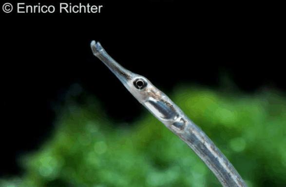 Bild: Enrico Richter