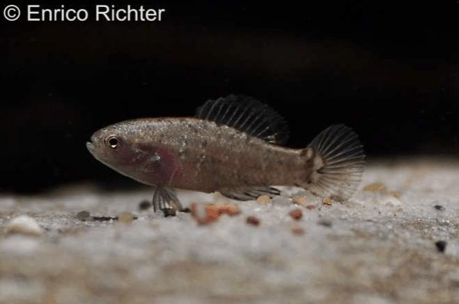 Verbreitungskarte und Fischentwicklung in der Erdgeschichte 2