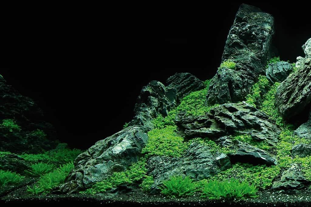 """Komplett gestaltetes Aquarium auf dem Eheim-Stand der Messe mit Hemianthus callitrichoides 'Cuba' auf dem """"Pyramidengipfel"""" und Pogostemon helferi im Vordergrund"""