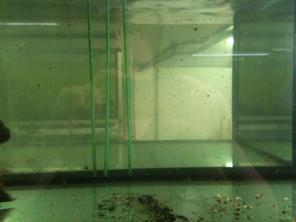 nur noch ein paar Algen treiben lose durch das Wasser