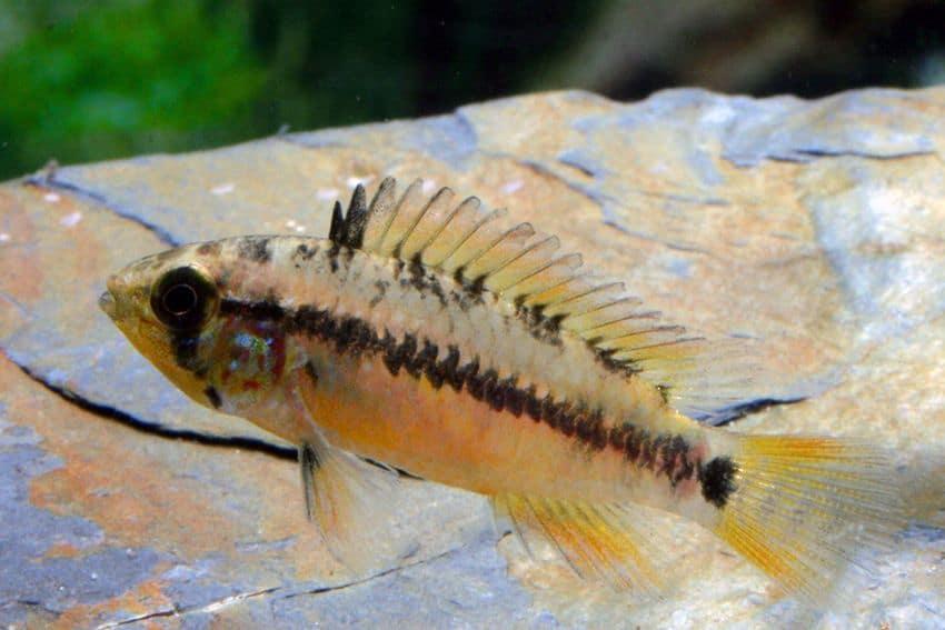 Bild: Aquarium Glaser