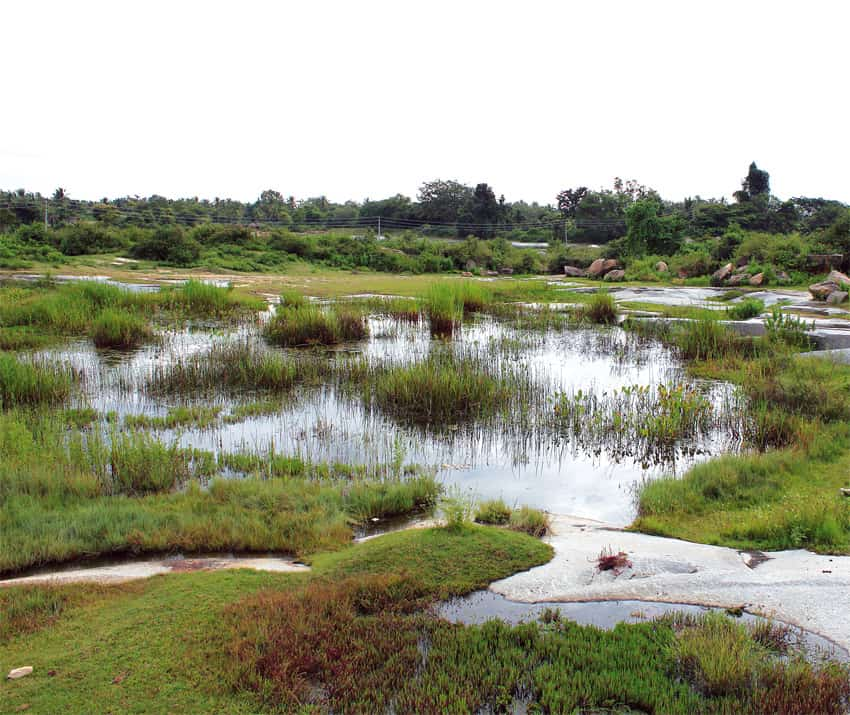 Das schönste Naturaquarium Südindiens