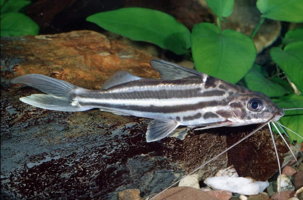 Verbreitungskarte und Fischentwicklung in der Erdgeschichte 13