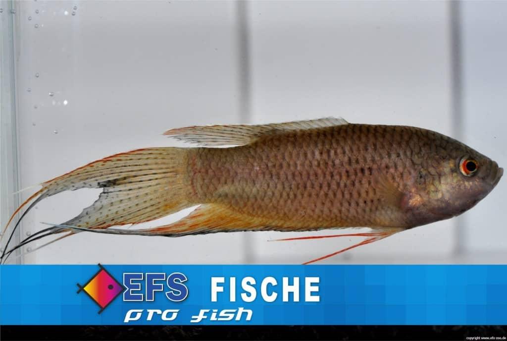 Bild: EFS, Partner des Zoofachhandels