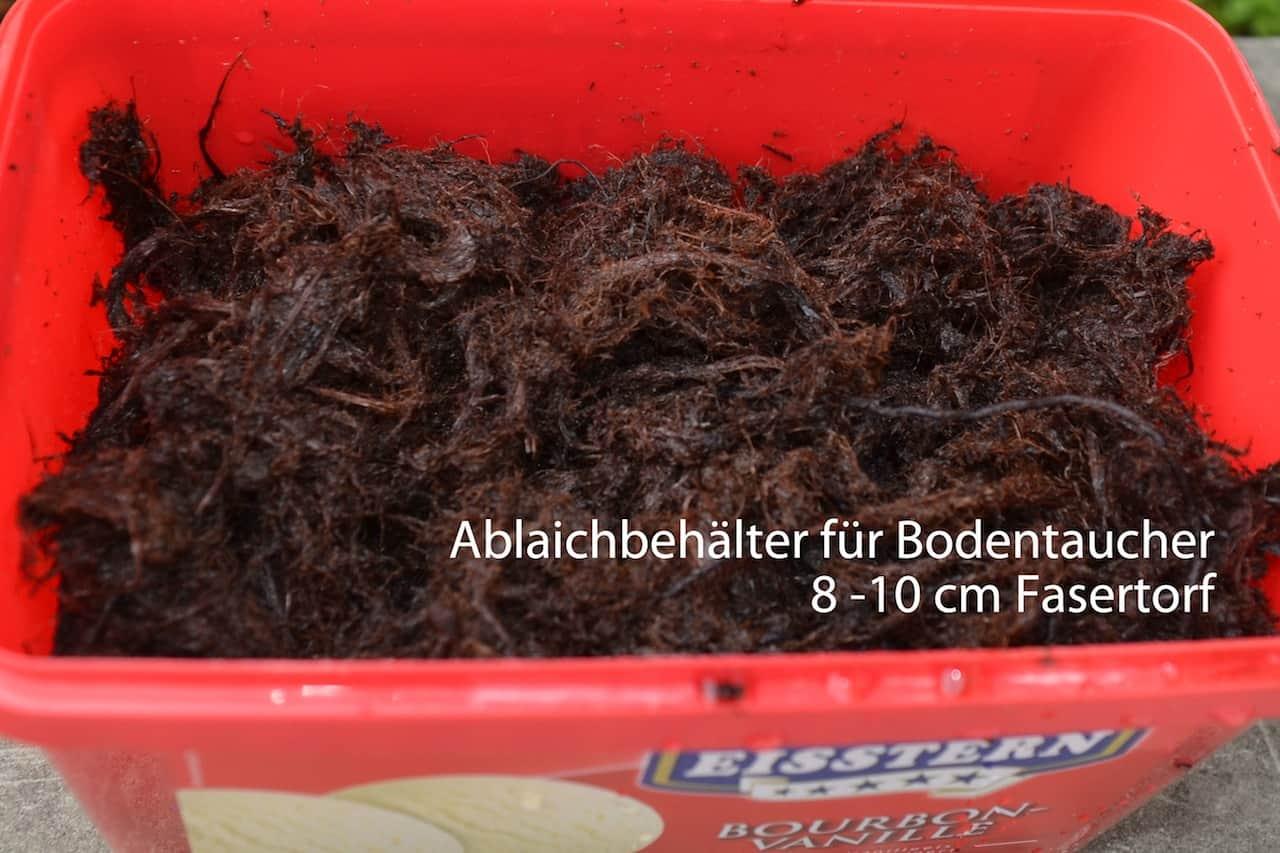 Pterolebias longipinnis – Langflossiger Schleierkaerpfling 5