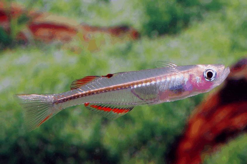 Verbreitungskarte und Fischentwicklung in der Erdgeschichte 59