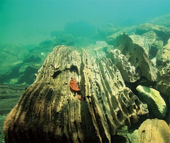 Unterwasserlandschaft im Poso-See auf Sulawesi mit Tylomelania auf den schroffen Felsen, Foto: C. Lukhaup