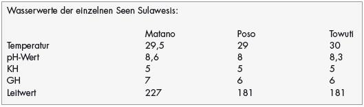 Sulawesi Wirbellose 7