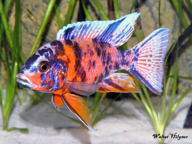 Foto: Aquarium Dietzenbach