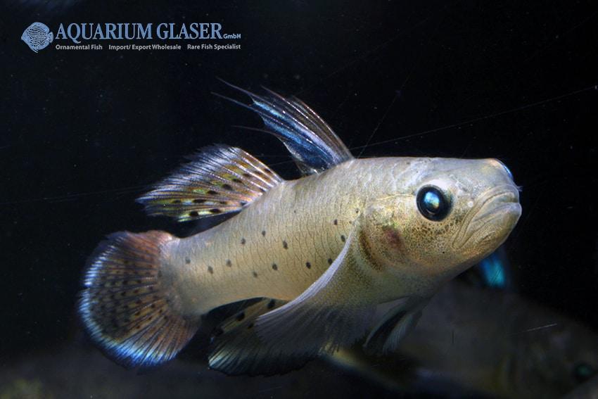 Verbreitungskarte und Fischentwicklung in der Erdgeschichte 51