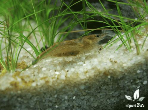 Bild: Bittner - aquaBits