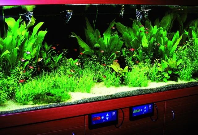 Ein typisches Hitech-Aquarium mit allem Drum und Dran. Foto: Claus Schaefer