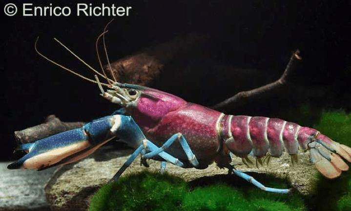 Wirbellose – Krebse, Garnelen und Schnecken 11